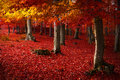 Red Trees In The Forest Royalty Free Stock Photos - 41526048