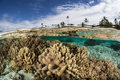 Shallow Coral Reef 3 Royalty Free Stock Photo - 41543545
