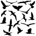 Vector Collection Of Bird Silhouettes Royalty Free Stock Photo - 41561445