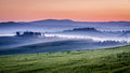 Farm Of Olive Groves And Vineyards In Foggy Morning Royalty Free Stock Photos - 41568838
