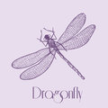 Organic Dragonfly Stock Images - 41632794