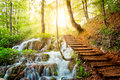 Deep Forest Stream With Crystal Clear Water In The Sunshine Royalty Free Stock Photo - 41645665