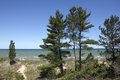Eastern White Pines On Sand Dune Ridge Royalty Free Stock Images - 41647719