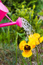 Watering Flowers Spring Garden Watering Can Stock Photography - 41674882