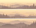 Banners Of Wild Coniferous Wood In Morning Fog. Royalty Free Stock Image - 41676426