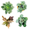 4 Plant Royalty Free Stock Images - 4176459
