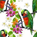 Exotic Birds And Beautiful Flowers Stock Photo - 41734610