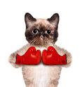 Cat With Big Red Gloves Stock Photo - 41739360