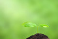 Small Plant Royalty Free Stock Image - 41751516