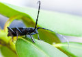 Black Beetle Stock Images - 41810124