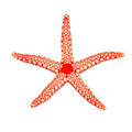 Pearl Sea Star Royalty Free Stock Photography - 41811247