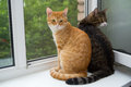 Two Cat Sitting On The Window Sill Stock Photos - 41829533