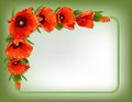 Red Poppies Floral Frame, Vector Royalty Free Stock Photo - 41829755