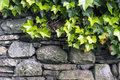 Ivy On The Wall Stock Photos - 41837033