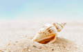 Shells  On Sandy Beach Royalty Free Stock Photos - 41838238