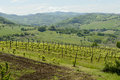 Hilly Vineyard In Curone Valley, Piedmont, Italy Stock Images - 41842294