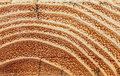 Excised Acacia  And Tree Rings Stock Photos - 41938793