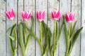 Pink Tulips In A Row Royalty Free Stock Photos - 41957658