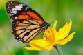 Closeup Butterfly On Flower Royalty Free Stock Photos - 41982038