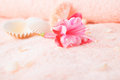Travel Concept With Delicate Pink Flower Fuchsia, Seashells Stock Photos - 41995953