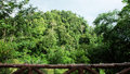 Tropical Rainforest Landscape With Sunshine Royalty Free Stock Image - 42055186