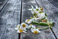 Wilting Flowers Stock Images - 42073504