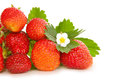 Fresh Strawberries . Royalty Free Stock Images - 42073799