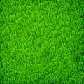Green Grass Field Royalty Free Stock Images - 42086329