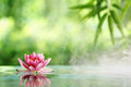 Water Lily Stock Images - 42105844