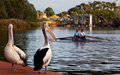 Couple Rowing On The River Torrens Royalty Free Stock Photo - 42133825