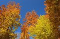 Autumn Forest On The Sky Background Royalty Free Stock Photo - 42136315