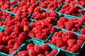 Bright Red Raspberries Royalty Free Stock Image - 42154256