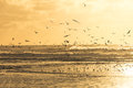 Seagulls Taking Off A Beach During Sunset Royalty Free Stock Photography - 42164357