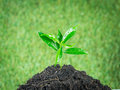 Young Small New Life Green Plant Royalty Free Stock Photos - 42167118