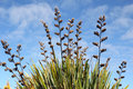 Flax Reaching High Royalty Free Stock Image - 42180796