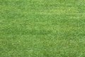 Grass Green Meadow Viewed From Above To Use As Wallpaper Or Back Royalty Free Stock Photography - 42183527