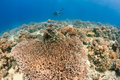 SCUBA Diver Over A Healthy Coral Reef Stock Image - 42195351