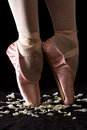 A Ballet Dancer Standing On Toes On Rose Petals With Black Backg Royalty Free Stock Image - 42197056