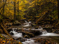 Autumn Forest Creek Stock Image - 42230471