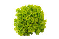Fresh Green Lettuce Isolated On A White Stock Images - 42233754