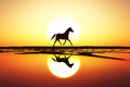 Horse Walk Silhouette Stock Photography - 42267582