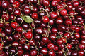 Red Cherries Royalty Free Stock Photo - 42268165