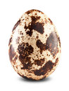 Quail Egg Royalty Free Stock Images - 42285519