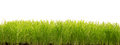 Green Grass Isolated On White Stock Photography - 42297912