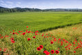 Poppies Fields Royalty Free Stock Photos - 4235088