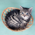 Top View Of A Cat  In A Basket Stock Photos - 42303623