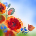 Red Poppies Field And Blue Cornflowers Royalty Free Stock Photo - 42304325