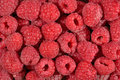 Red Raspberries Background Royalty Free Stock Photography - 42321297