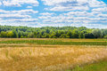 Landscape Beautiful Clouds Over A Large Field Near The Forest Stock Photo - 42321870
