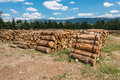 Harvesting Timber Logs In A Forest Royalty Free Stock Photo - 42341635